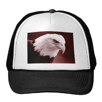 Retrato americano de Eagle calvo Gorra