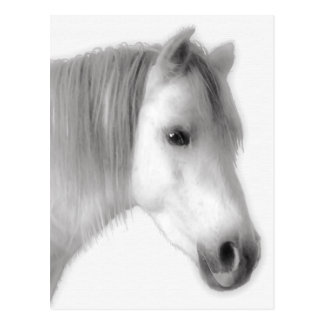 Retrato árabe blanco del caballo postales