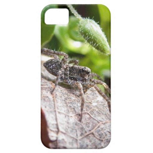 Retrato - araña joven iPhone 5 funda