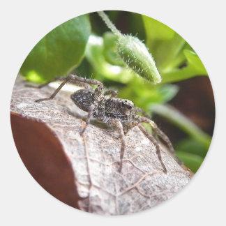 Retrato - araña joven pegatina redonda