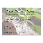 Retrato - araña joven plantilla de tarjeta de negocio