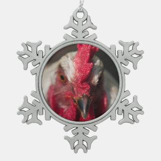 Retrato ascendente cercano del gallo adornos