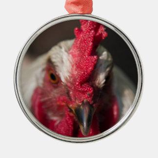 Retrato ascendente cercano del gallo ornaments para arbol de navidad