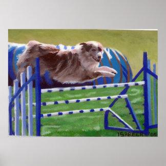 Retrato australiano del perro de la agilidad del p póster