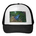 Retrato azul de la rana de la flecha del veneno gorras de camionero