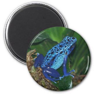 Retrato azul de la rana de la flecha del veneno iman para frigorífico