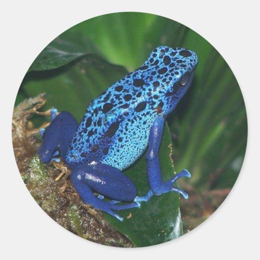 Retrato azul de la rana de la flecha del veneno pegatina
