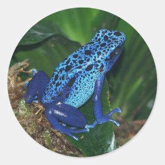 Retrato azul de la rana de la flecha del veneno pegatina redonda