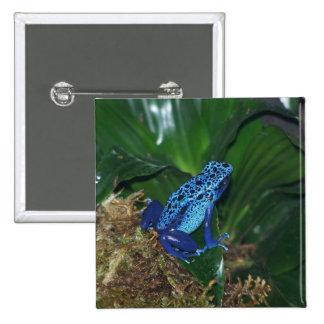 Retrato azul de la rana de la flecha del veneno pin cuadrado