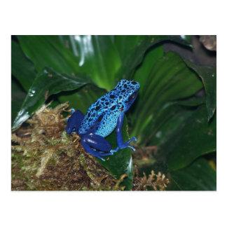 Retrato azul de la rana de la flecha del veneno postal