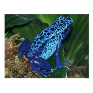 Retrato azul de la rana de la flecha del veneno tarjetas postales