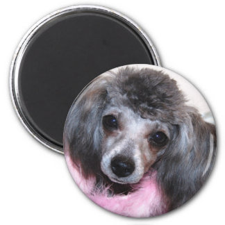 Retrato azul de plata de la cara del perrito del c imán redondo 5 cm