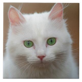 Retrato blanco de ojos verdes hermoso del gato azulejo cuadrado grande