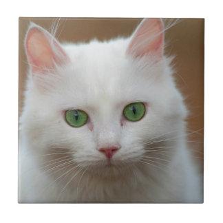 Retrato blanco de ojos verdes hermoso del gato azulejo cuadrado pequeño