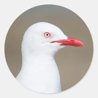 Retrato blanco del lado de la gaviota pegatina redonda
