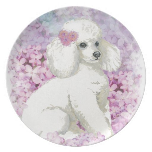 Retrato blanco del perrito del caniche plato de comida
