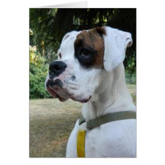 Retrato blanco del perro del boxeador tarjeta pequeña