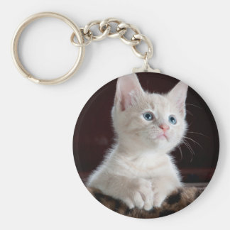 Retrato blanco lindo del gatito llaveros