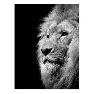 Retrato blanco negro del león - fotografía animal tarjeta postal