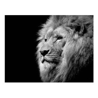 Retrato blanco negro del león - fotografía animal tarjetas postales