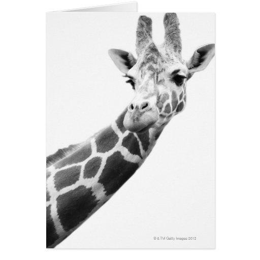 Retrato blanco y negro de una jirafa felicitacion
