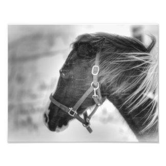 Retrato blanco y negro del caballo foto