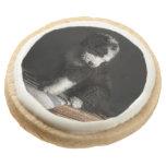Retrato Bobtail del perrito en estudio
