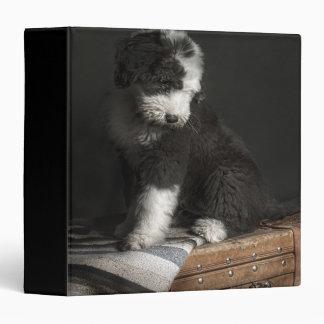 "Retrato Bobtail del perrito en estudio Carpeta 1 1/2"""