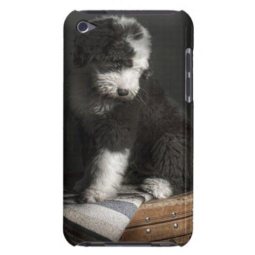 Retrato Bobtail del perrito en estudio Case-Mate iPod Touch Carcasa