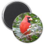 Retrato cardinal imanes de nevera