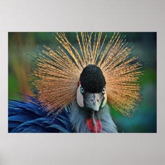 Retrato coronado gris del pájaro de la grúa póster
