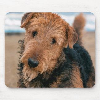 Retrato de Airedale Terrier 2 Alfombrillas De Raton