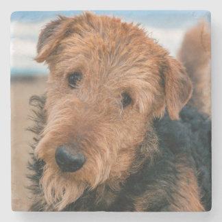Retrato de Airedale Terrier 2 Posavasos De Piedra