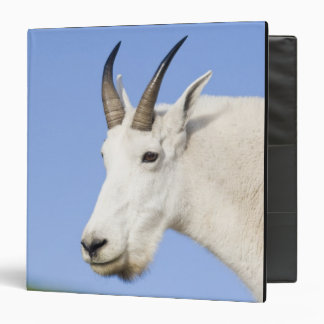 """Retrato de Billy de la cabra de montaña en el paso Carpeta 1 1/2"""""""