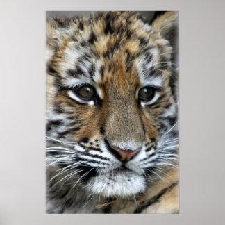 Retrato de Cub de tigre de Amur del bebé Póster