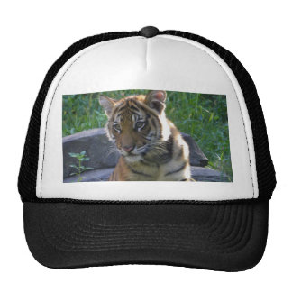 Retrato de Cub de tigre Gorras