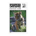 Retrato de Cub de tigre Sellos Postales