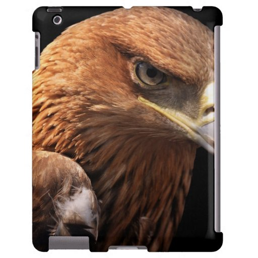 Retrato de Eagle aislado en negro