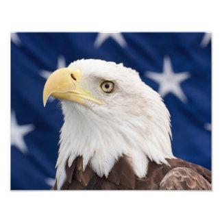 Retrato de Eagle calvo con las estrellas Cojinete