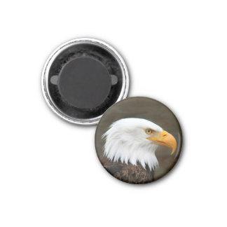 Retrato de Eagle calvo Imán Redondo 3 Cm