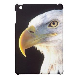 Retrato de Eagle calvo, leucocephalus del Haliaeet