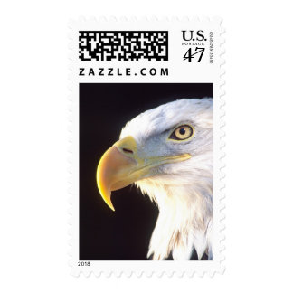 Retrato de Eagle calvo, leucocephalus del Timbres Postales