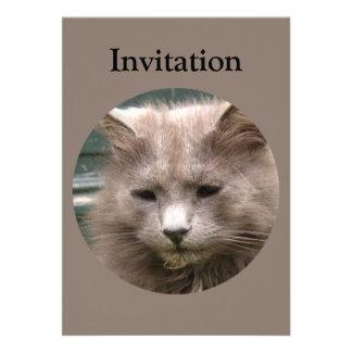 Retrato de Kyra del gato Invitación Personalizada