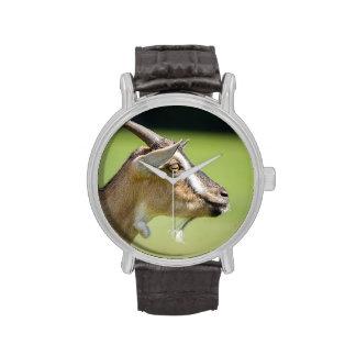 Retrato de la cabra en un fondo verde borroso relojes de mano