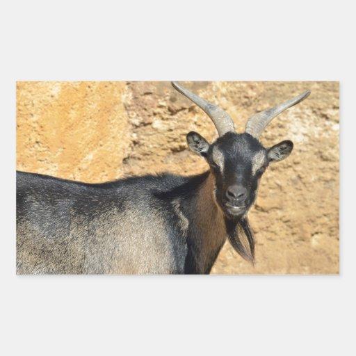 Retrato de la cabra pegatina rectangular