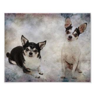 Retrato de la chihuahua dos cojinete