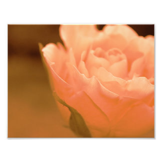 Retrato de la flor cojinete