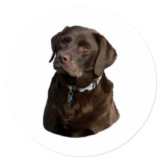 """Retrato de la foto de Labrador del chocolate Invitación 5.25"""" X 5.25"""""""