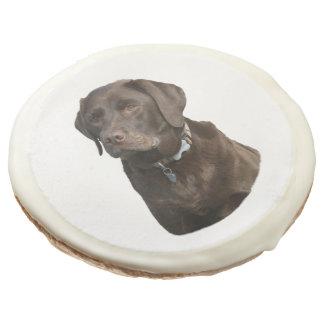 Retrato de la foto de Labrador del chocolate