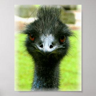 RETRATO DE LA FOTO DEL PÁJARO DEL EMU POSTERS